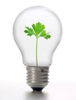 5 Fases de un Plan de Sostenibilidad en la Empresa